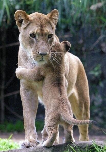 a Hug for a Mother
