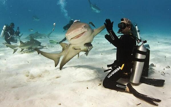 Nothing you ever do will be as awesome as HIGH-FIVING A SHARK