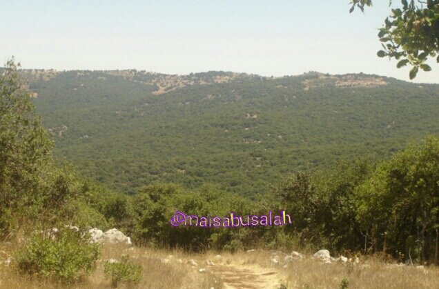 الطبيعة في #عجلون #الأردن من تصوير @maisabusalah