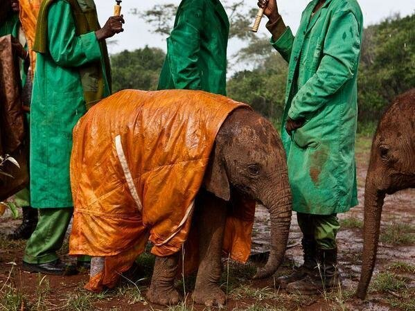 A baby elephant in a raincoat