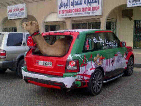 كل يحتفل ب #العيد_الوطني في #الإمارات بطريقته