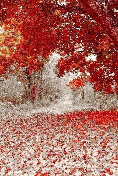 Winter and Fall Meet Each Other