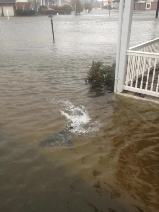 سمك القرش قرب منزل في #نيوجيرسي #الولايات_المتحدة
