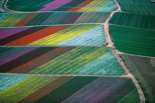 Tulip fields from above - Holland