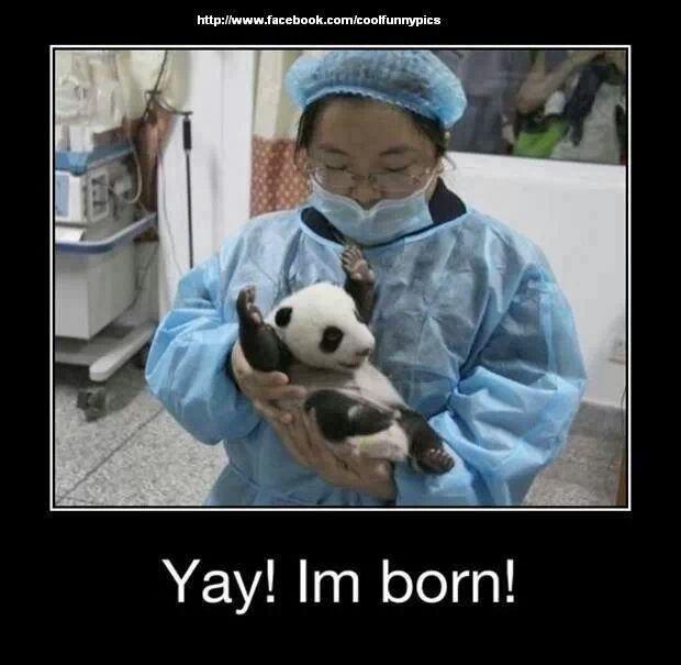 Yay he s born hehe