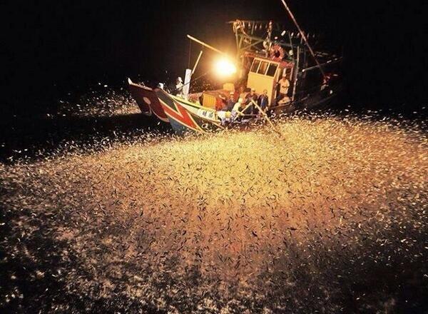 Chinese fishermen using fire to attract fish at night