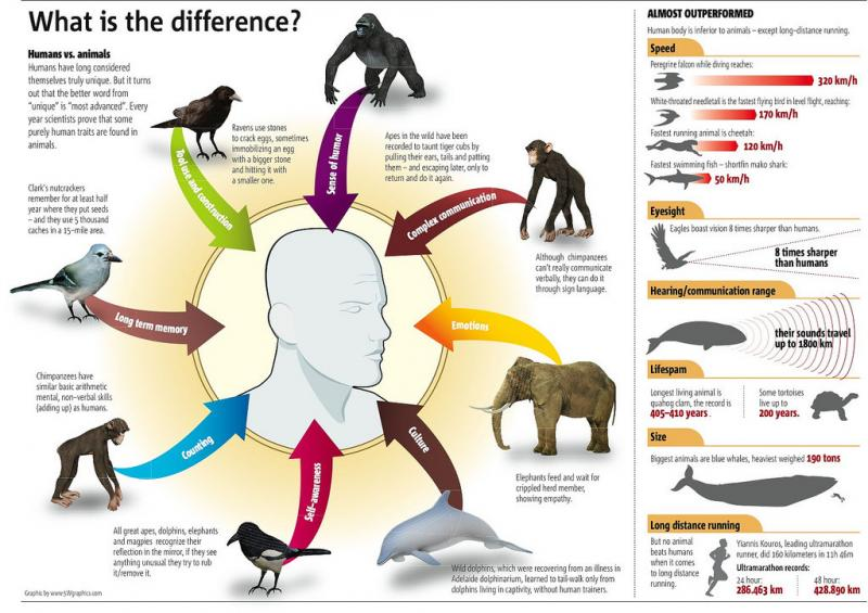 humans vs animals whats the difference #infographic