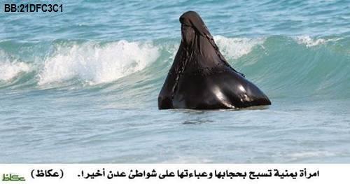 سم المخلوق البحري الموجود في الصورة