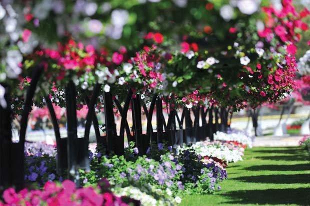 حدائق #العين #أبوظبي