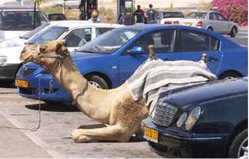 just in #KSA