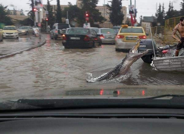 تماسيح #الأردن #نهفات