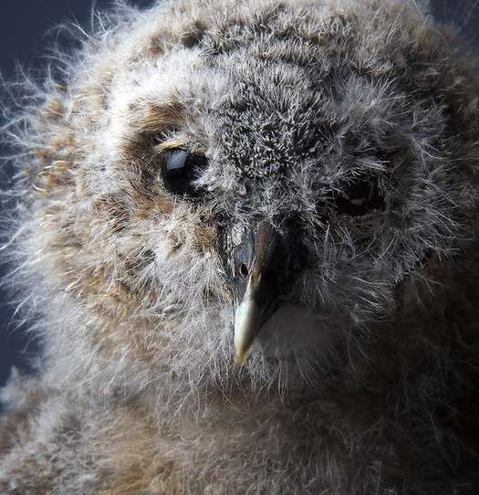 baby owl was captured with a #Nikon D90