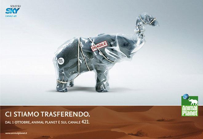 اعلانات مطبوعة مبدعة قناة كوكب الحيوان #اعلان