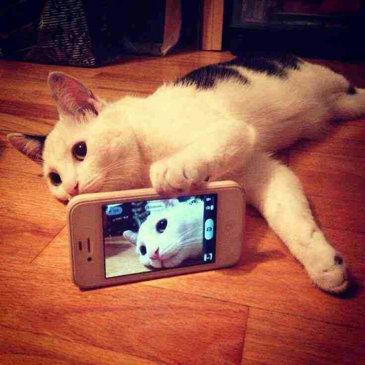 Cat #Selfie