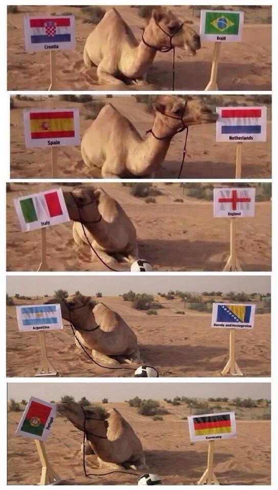 الجمل شاهين يتوقع فوز البرتغال #كأس_العالم