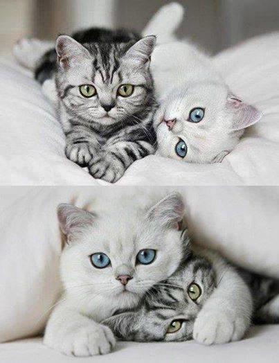 جميلات العيون