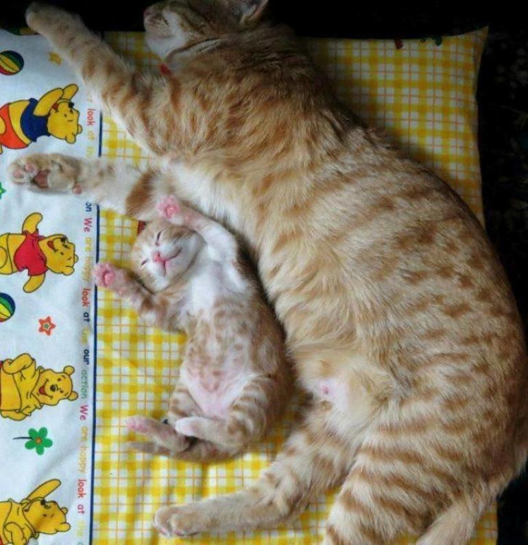 #قطط _حميلة