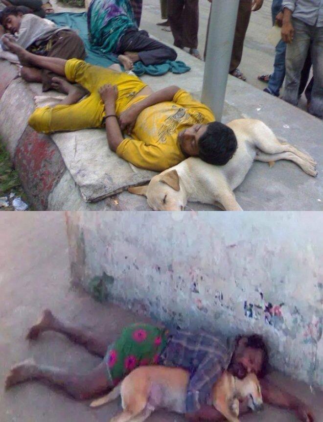 مبادرات الرفق بالإنسان في كوكب الهند