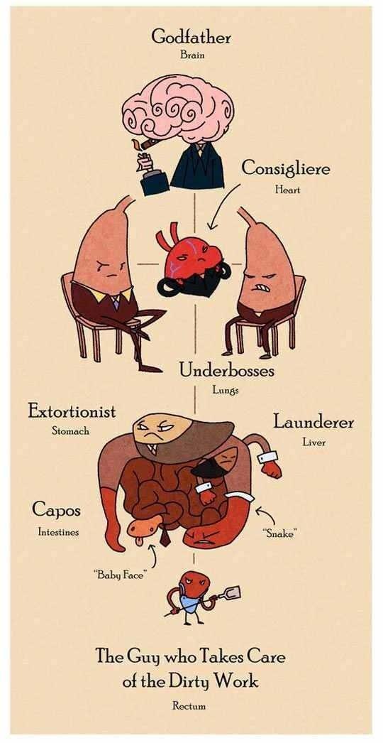 The Human Body Organs Gang