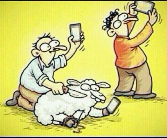 #سيلفي مع أضحية العيد - حتی أنت يا خروف؟!