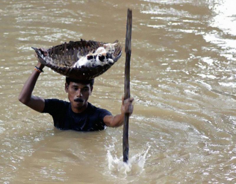 صور لا تحتاج الى تعليق (فلاح هندي ينقذ مجموعة من القطط الصغيرة أثناء فيضان مدينة كوتاك في الهند عام 2011)