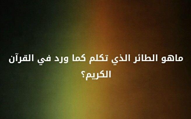 ما هو الطائر الذي تكلم كما ورد في القرآن الكريم؟ #لغز