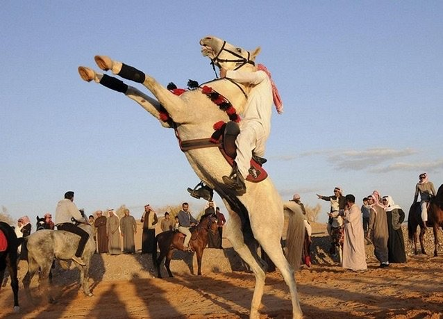 بانوراما صور #السعودية لعام ٢٠١٤ - خيال يستعرض في تبوك