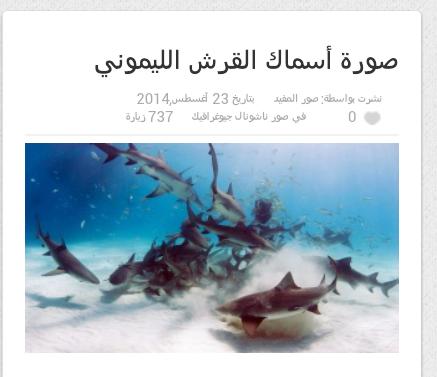 صورة اسماك القرش الليموني #غرائب