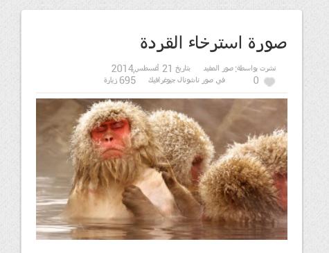 صورة استرخاء القردة #غرائب
