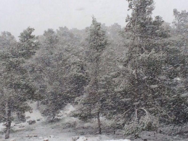 الثلوج في عجلون في #الأردن غردها @FaresSayegh على #تويتر
