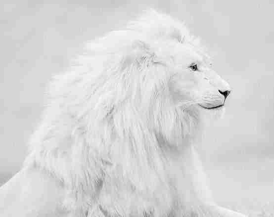 عجائب عالم الحيوان - صورة 36
