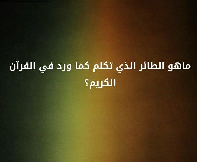 ما هو الطائر الذي تكلم كما ورد في القرآن الكريم ؟#لغز