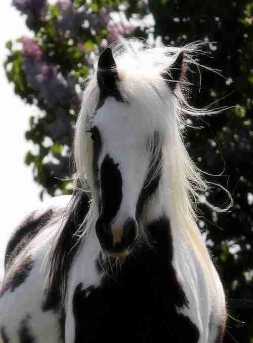 عجائب عالم الحيوان - صورة 42