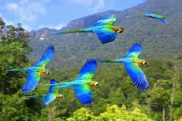 عجائب عالم الحيوان - صورة 49