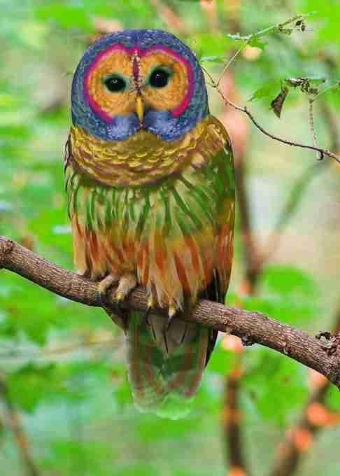 عجائب عالم الحيوان - صورة 19