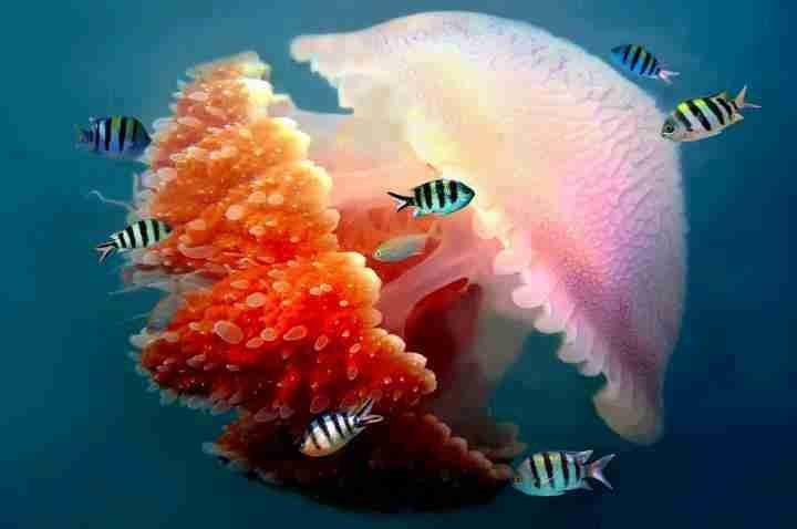 عجائب عالم الحيوان - صورة 47