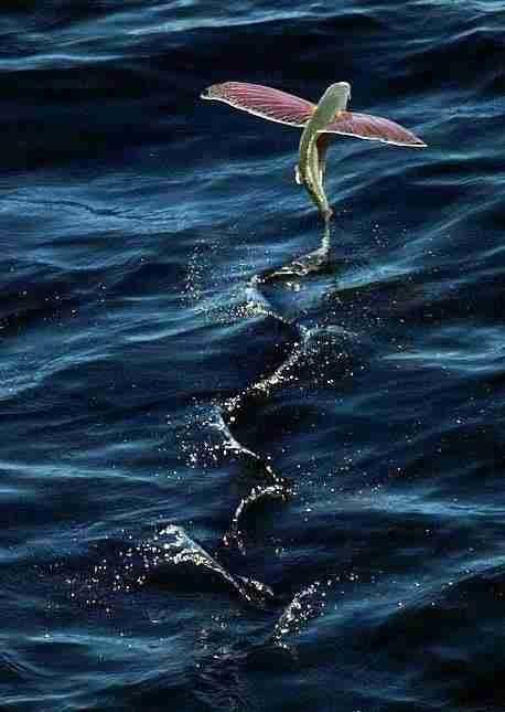 عجائب عالم الحيوان - صورة 30