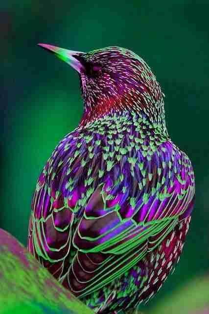 عجائب عالم الحيوان - صورة 20