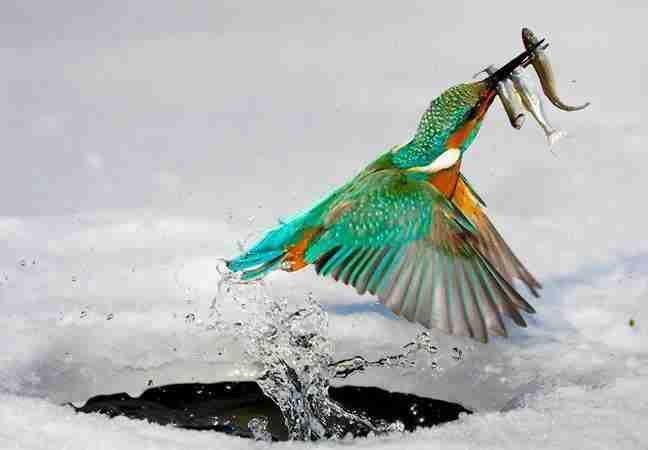 عجائب عالم الحيوان - صورة 33