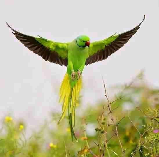 عجائب عالم الحيوان - صورة 22