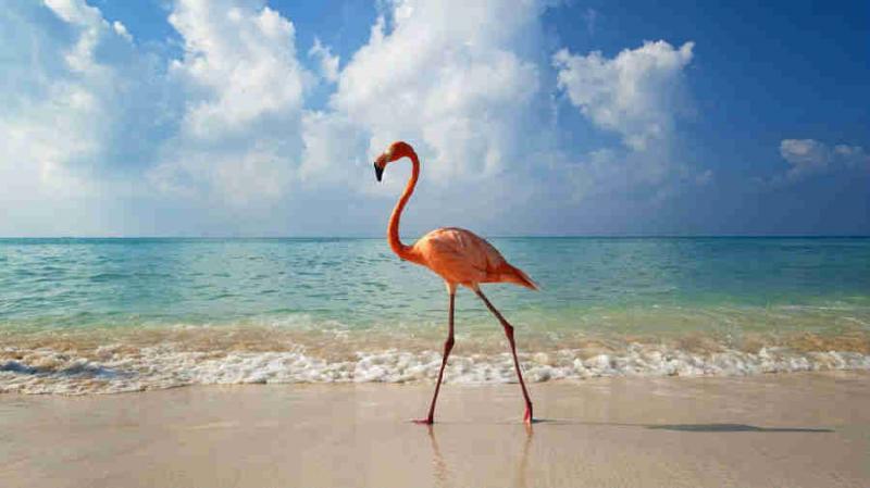 عجائب عالم الحيوان - صورة 45