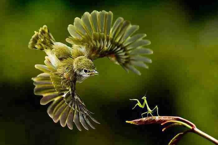 عجائب عالم الحيوان - صورة 43