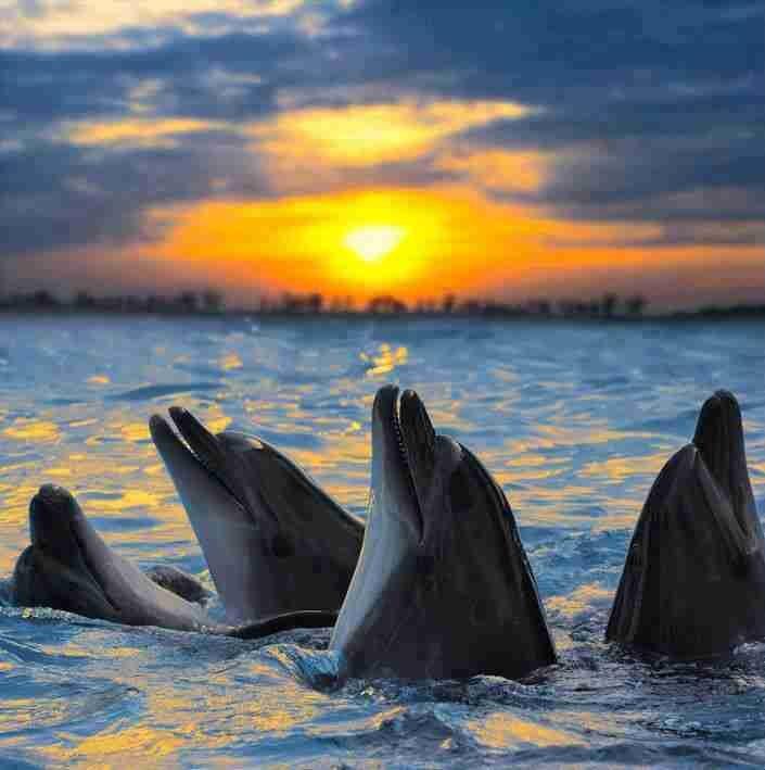 عجائب عالم الحيوان - صورة 29