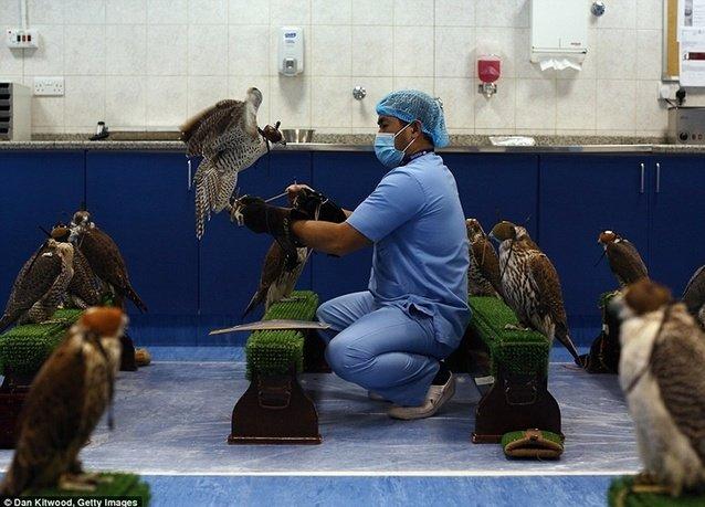 مستشفى صقور #أبوظبي الأكبر عالمياً - صورة 3