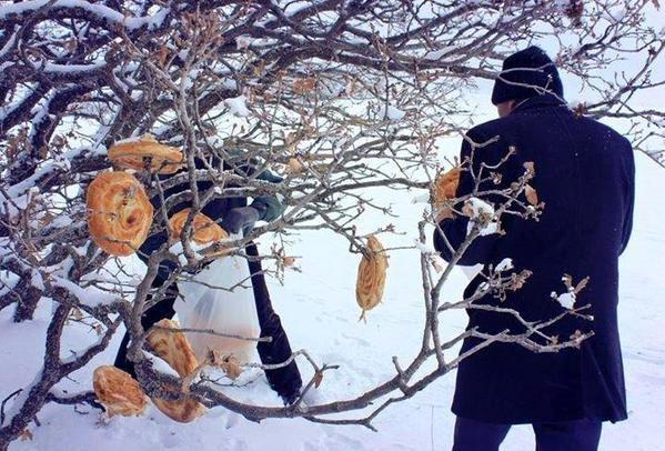 فى تركيا البرد لم يمنعهم من الرفق بالطيور و تعليق الخبز على الأشجار لكى لا تشعر الطيور بالجوع #تركيا #غرد_بصورة