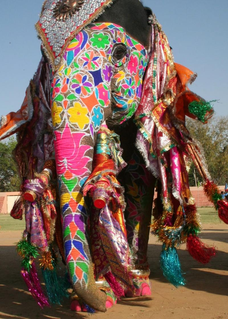 Colored elephant in the #Holi