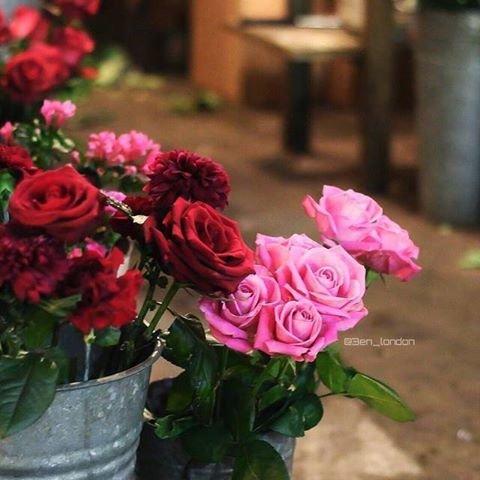 كُل إنساںْ معرضٌ لفترة ضُعف ، حتَى الورد تدآعبهُ رياح ثمّ يعصفهُ مَطر ، لكِن بدلَ أن ينكسر ، يفوحُ عطراً #غرد_بصوره