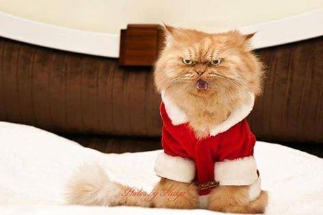 قط يدعى جارفيلد يقلب بالقط الأكثر غضباً في العالم بسبب نظراته الغريبة، رغم انه قط هادئ ومطيع#غرد_بصوره