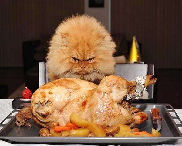 """قط يدعى \""""جارفيلد\"""" يقلب بالقط الأكثر غضباً في العالم بسبب نظراته الغريبة، رغم انه قط هادئ ومطيع#غرد_بصوره"""