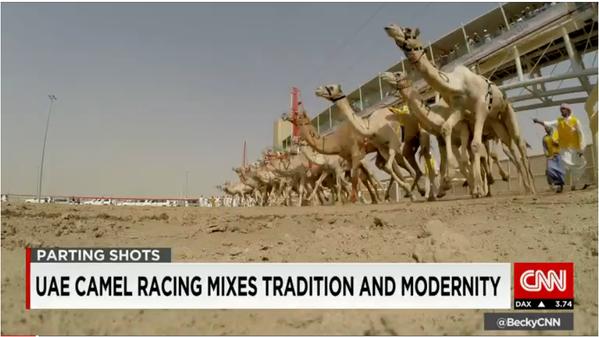 سي ان ان سباقات الهجن في #الامارات مزيج فريد بين التقاليد والحداثة